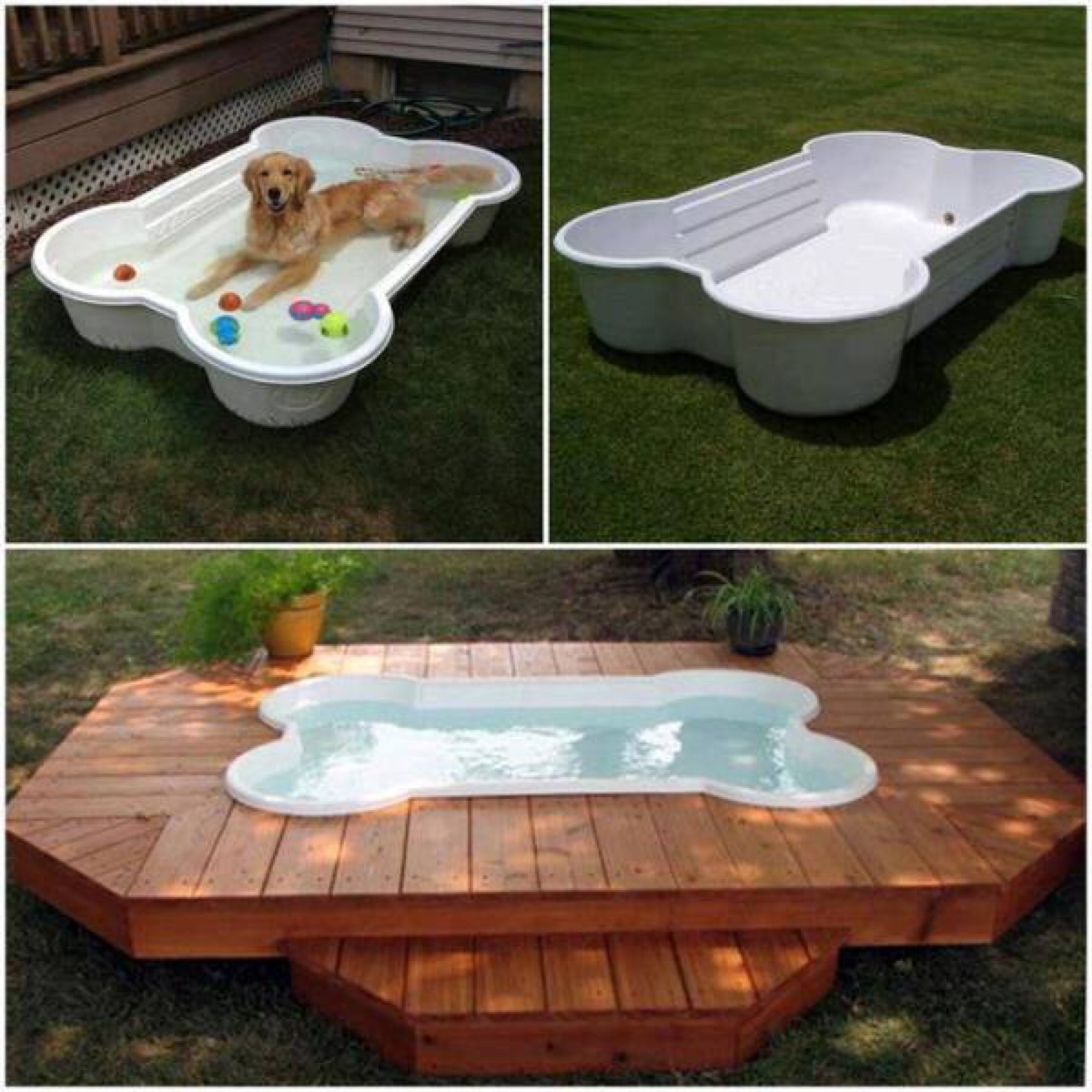backyard pools for dogs