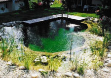 inground swimming pools that look like ponds