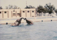 swimming pool installation kansas city